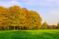 Autumn Scenery of Colorful Trees and Green Meadow Royalty Free Stock Photography