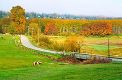 Autumn scenery, country road, Cathcart Washington Stock Photography