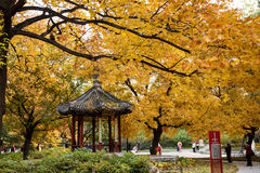 Autumn scenery. Ditan Park was built in the year 1530 is the Ming and Qing Dynasties two emperors worship places, but also China the biggest festival of. The Royalty Free Stock Photography