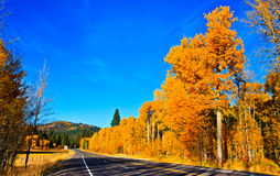 Autumn scenery, fall foliage, Washington Stock Photography