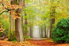 Autumn. Scenery in a foggy morning Royalty Free Stock Photography
