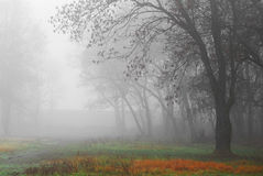 Autumn scenery in the forest with morning fog Stock Image