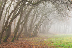 Autumn scenery in the forest with morning fog Royalty Free Stock Photos