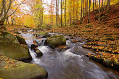 Autumn scenery in the forest Stock Photos