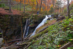 Autumn scenery in the forest Stock Photography