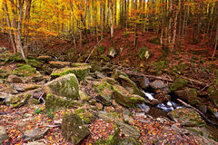 Autumn scenery in the forest Royalty Free Stock Image