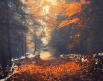 Autumn scenery of forest path on a foggy morning Stock Photos