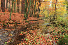 Autumn scenery in forest Royalty Free Stock Photography