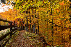 Autumn scenery in the forest Stock Images