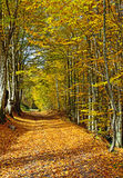 Autumn scenery in the forest Royalty Free Stock Photo