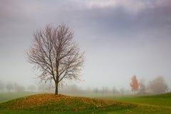 Autumn scenery on a golf course Stock Photos