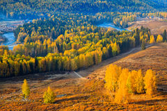 Autumn scenery @ Hemu, Xinjiang China Royalty Free Stock Photos