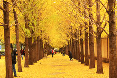 Autumn Scenery In Beijing Royalty Free Stock Photos