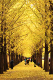Autumn Scenery In Beijing Stock Photography
