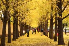 Autumn Scenery In Beijing Stock Images