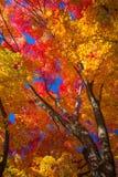 Autumn scenery of Japan Royalty Free Stock Photos
