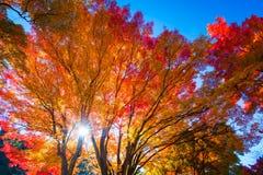 Autumn scenery of Japan Stock Image