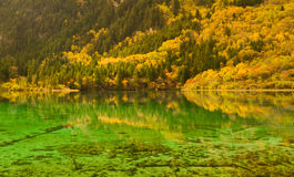 The autumn scenery stock image