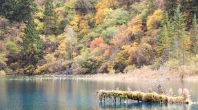 The autumn scenery royalty free stock photos