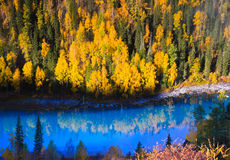Autumn scenery @ Kanas, Xinjiang China Royalty Free Stock Photo