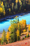 Autumn scenery @ Kanas, Xinjiang China Stock Photos