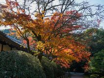 Autumn scenery of Kyoto, Japan stock photos