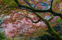 Autumn scenery in Kyoto, Japan Stock Photos