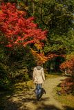 Autumn scenery of Kyoto, Japan stock images