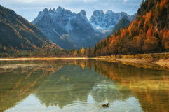 Autumn scenery of Lake Landro in Dolomite Alps, Italy Stock Image