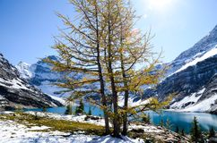 Autumn Scenery of Lake McArthur, Yoho National Park, Canadian Rockies. British Columbia, Canada royalty free stock photography