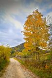 Autumn scenery landscape with colorful forest, wood fence and rural road in Prisaca Dornei. Suceava County, Bucovina, Romania Stock Images