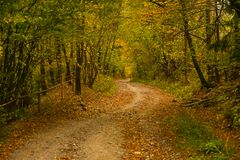 Autumn scenery landscape with colorful forest, wood fence and rural road in Prisaca Dornei. Suceava County, Bucovina, Romania Royalty Free Stock Photography