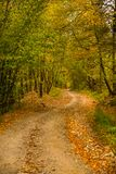 Autumn scenery landscape with colorful forest, wood fence and rural road in Prisaca Dornei. Suceava County, Bucovina, Romania Royalty Free Stock Image