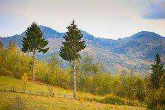 Autumn scenery landscape with colorful forest, wood fences and hay barns in Bucovina, Romania. Autumn scenery landscape with colorful forest, wood fences and hay Stock Images