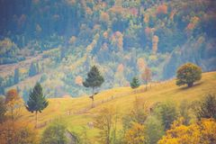 Autumn scenery landscape with colorful forest, wood fences and hay barns in Bucovina, Romania. Autumn scenery landscape with colorful forest, wood fences and hay Stock Photos