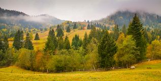 Autumn scenery landscape with colorful forest, wood fences and hay barns in Bucovina, Romania. Autumn scenery landscape, colorful forest, wood fences and hay Stock Photography