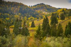 Autumn scenery landscape with colorful forest, wood fences and hay barns in Bucovina, Romania. Autumn scenery landscape with colorful forest, wood fences and hay Royalty Free Stock Image