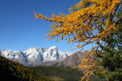Autumn scenery near Morgex Royalty Free Stock Photo