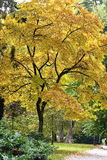 Autumn scenery  in the park Stock Images