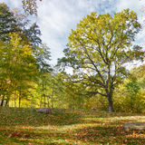 Autumn scenery in park Royalty Free Stock Images