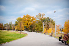 Autumn Scenery of Park Alley with Bushes and Trees on Green Grass Stock Photos