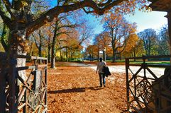 Autumn scenery in park / golden trees. Entering a park in autumn environement, fall, autumn scenery royalty free stock images