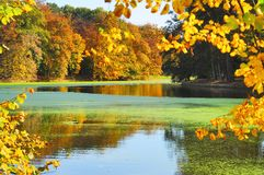 Autumn scenery in park / golden trees. Lake reflection in a park in autumn environement, fall, autumn scenery stock photos