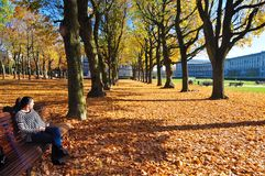 Autumn scenery in park / golden trees. Woman a park on a bench, autumn environement, fall, autumn scenery royalty free stock photography