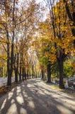 Autumn scenery in park. Autumn scenery in Herastrau Park, Bucharest, Romania Stock Photos