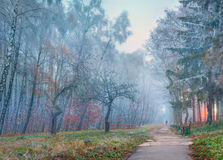 Autumn scenery in the park. Royalty Free Stock Photos