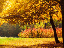 Autumn scenery in park Stock Images