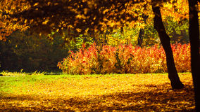 Autumn scenery in park Royalty Free Stock Photos
