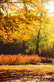 Autumn scenery in park Stock Photo