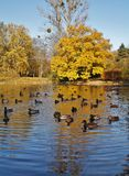 Autumn scenery - pond in the park Royalty Free Stock Images